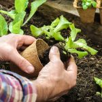 10 Vegetable Garden Plants To Grow Now For A Quick Harvest